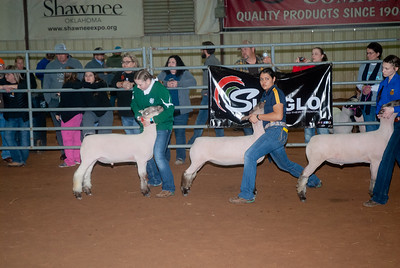 2020130_central_district_sheep-3