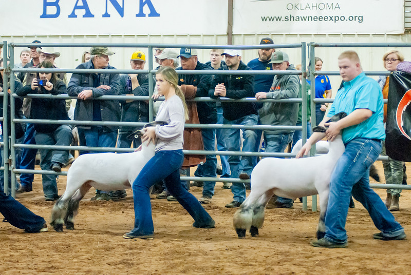 2020130_central_district_sheep-15