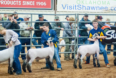 2020130_central_district_sheep-11