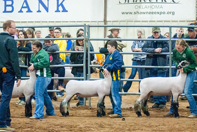 2020130_central_district_sheep-7