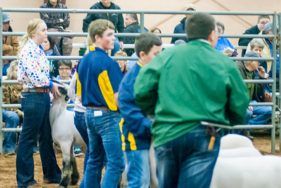 2020130_central_district_sheep-17