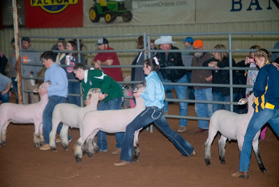 2020130_central_district_sheep-1