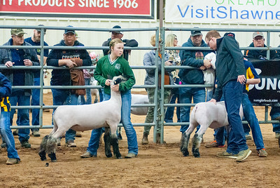 2020130_central_district_sheep-6