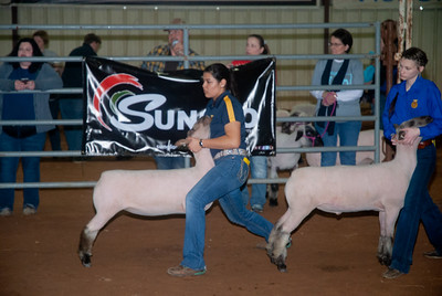 2020130_central_district_sheep-2
