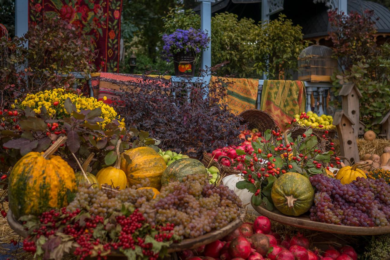 Colorful harvest foods