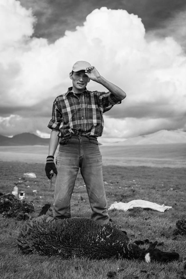 Sheep-Shearer, Lake Song-Kul
