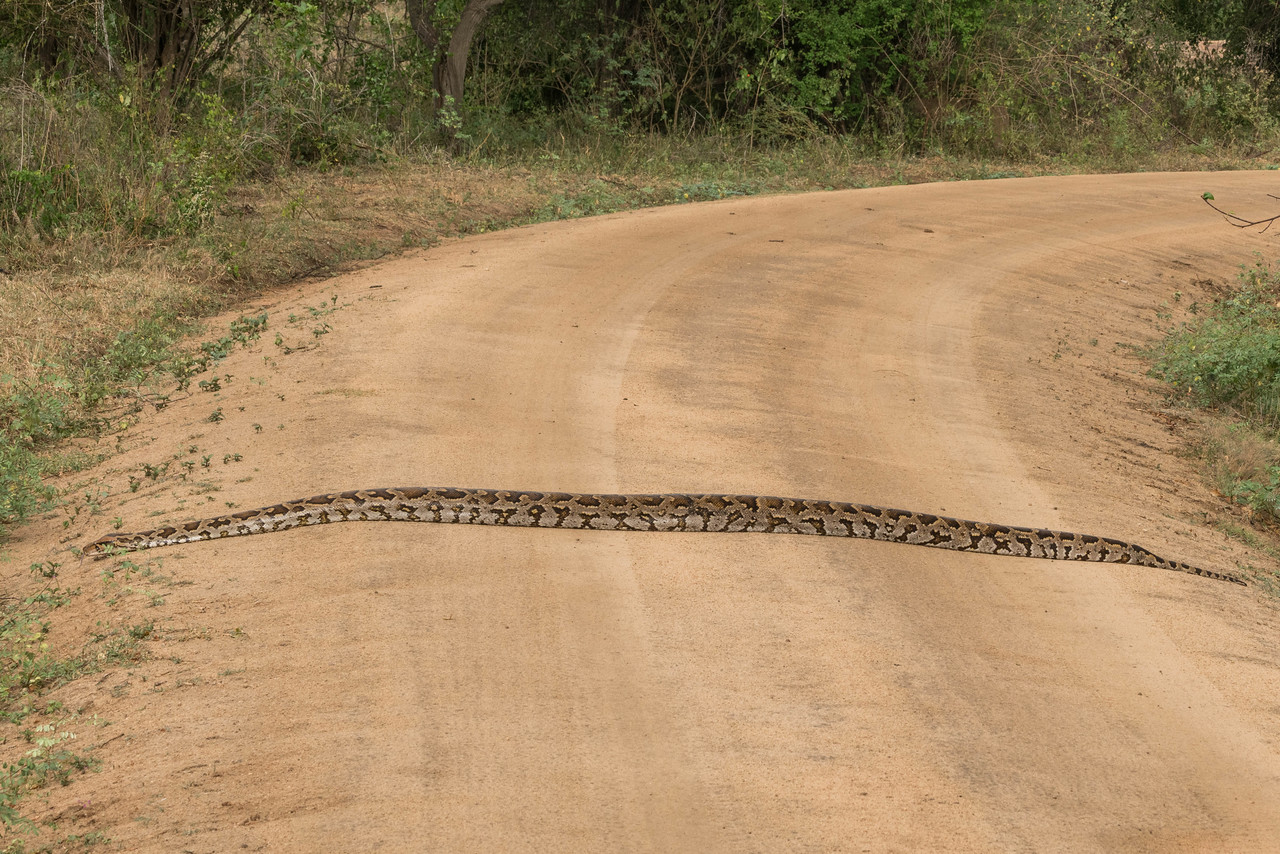 sri lanka safari python