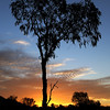Desert Bloodwood Sunset