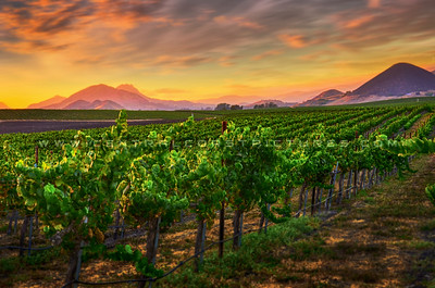 edna-valley-vineyard_3369-e