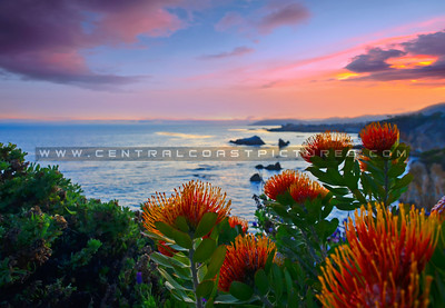 shell beach flower sunset_5933