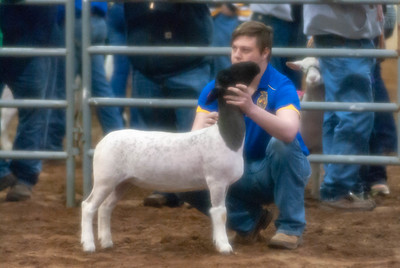 20190131_CENTRAL_DISTRICT_SHEEP04