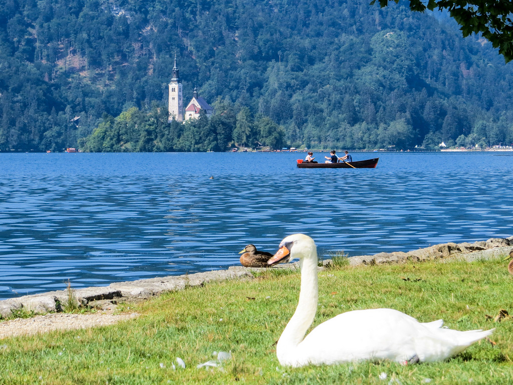 lake bled images