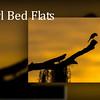Marl Bed Flats 720