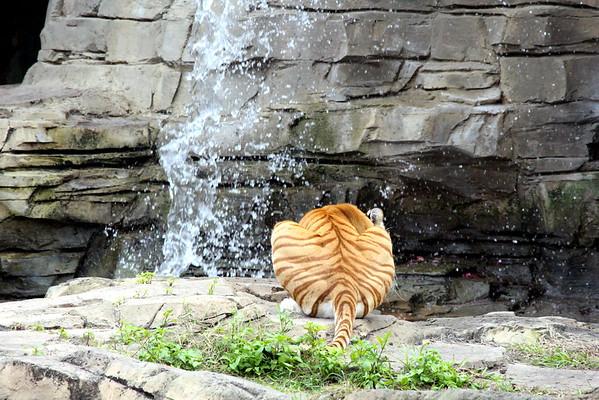 Wildlife@Busch Gardens2