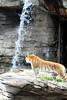 Wildlife@Busch Gardens5