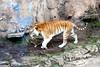 Wildlife@Busch Gardens11