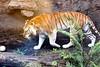 Wildlife@Busch Gardens12