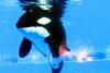 Jack Hanna@SeaWorldOrcasUnderWater11