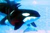 Jack Hanna@SeaWorldOrcasUnderWater20