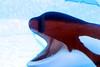 Jack Hanna@SeaWorldOrcasUnderWater24