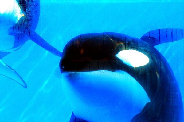 Jack Hanna@SeaWorldOrcasUnderWater01
