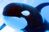 Jack Hanna@SeaWorldOrcasUnderWater12