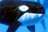 Jack Hanna@SeaWorldOrcasUnderWater22