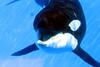 Jack Hanna@SeaWorldOrcasUnderWater17