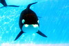 Jack Hanna@SeaWorldOrcasUnderWater15