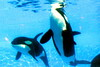 Jack Hanna@SeaWorldOrcasUnderWater14