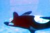 Jack Hanna@SeaWorldOrcasUnderWater10