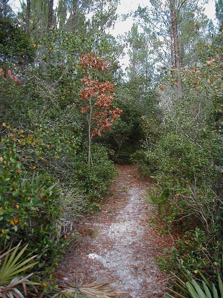 Hiking the Florida Trail north of Royal Trails through an outlying tract of Seminole State Forest<br /> Photo credit: FTA / Deb Blick