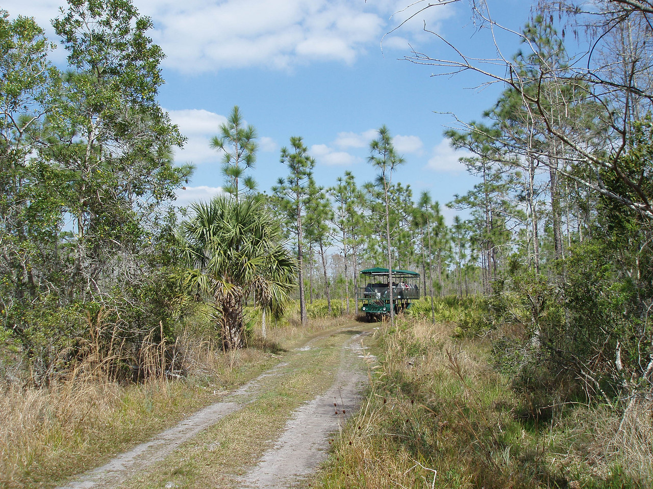 Swamp buggy tour coming down the trail<br /> location: Forever Florida<br /> PHOTO CREDIT: Robert Coveney / Florida Trail Association