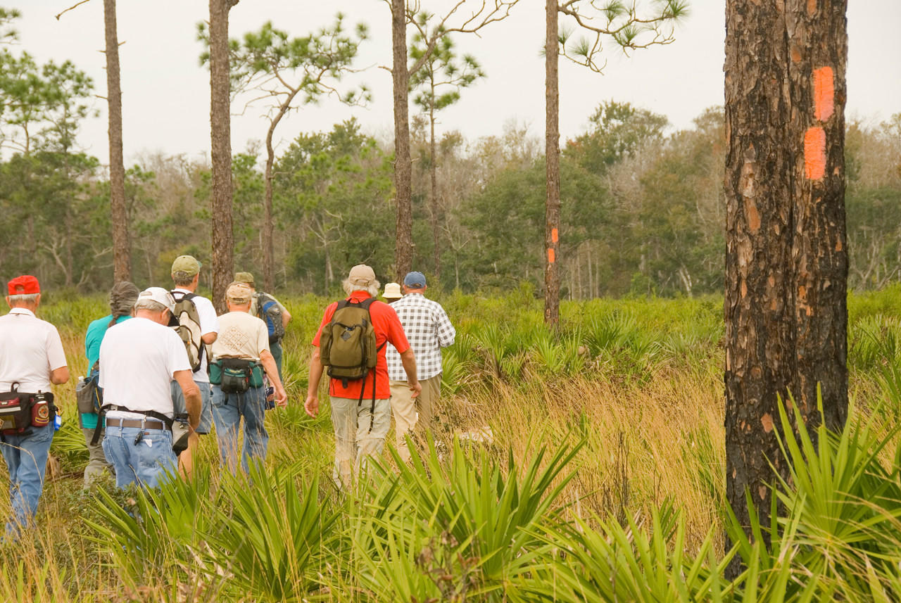 Hikers follow the orange blazes into palmetto scrub<br /> location: Forever Florida<br /> PHOTO CREDIT: M. Timothy O'Keefe / Florida Trail Association