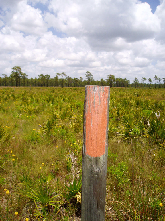 Open palmetto prairie along the Florida Trail    <br /> location: Forever Florida<br /> PHOTO CREDIT: Deb Blick / Florida Trail Association