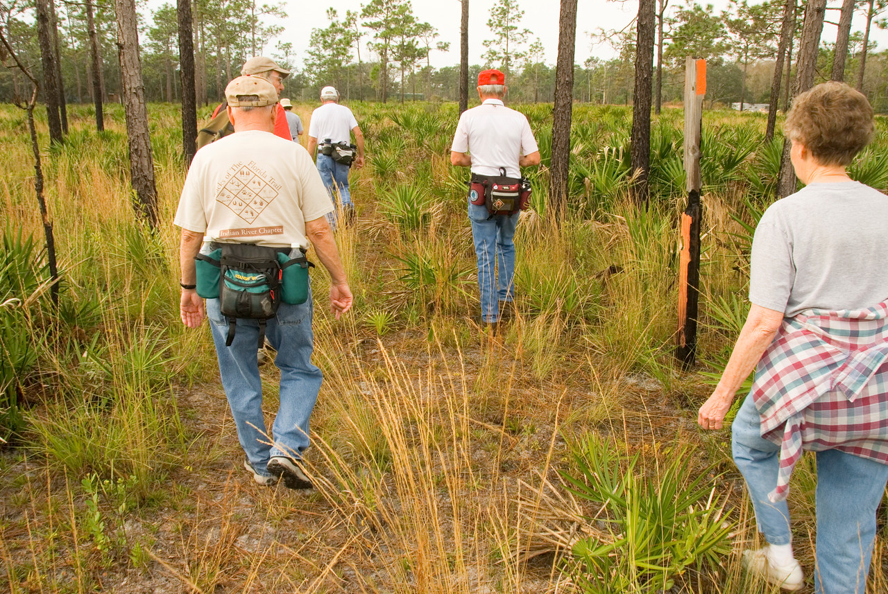 Hikers following the Florida Trail through pines and palmettos<br /> location: Forever Florida<br /> PHOTO CREDIT: M. Timothy O'Keefe / Florida Trail Association