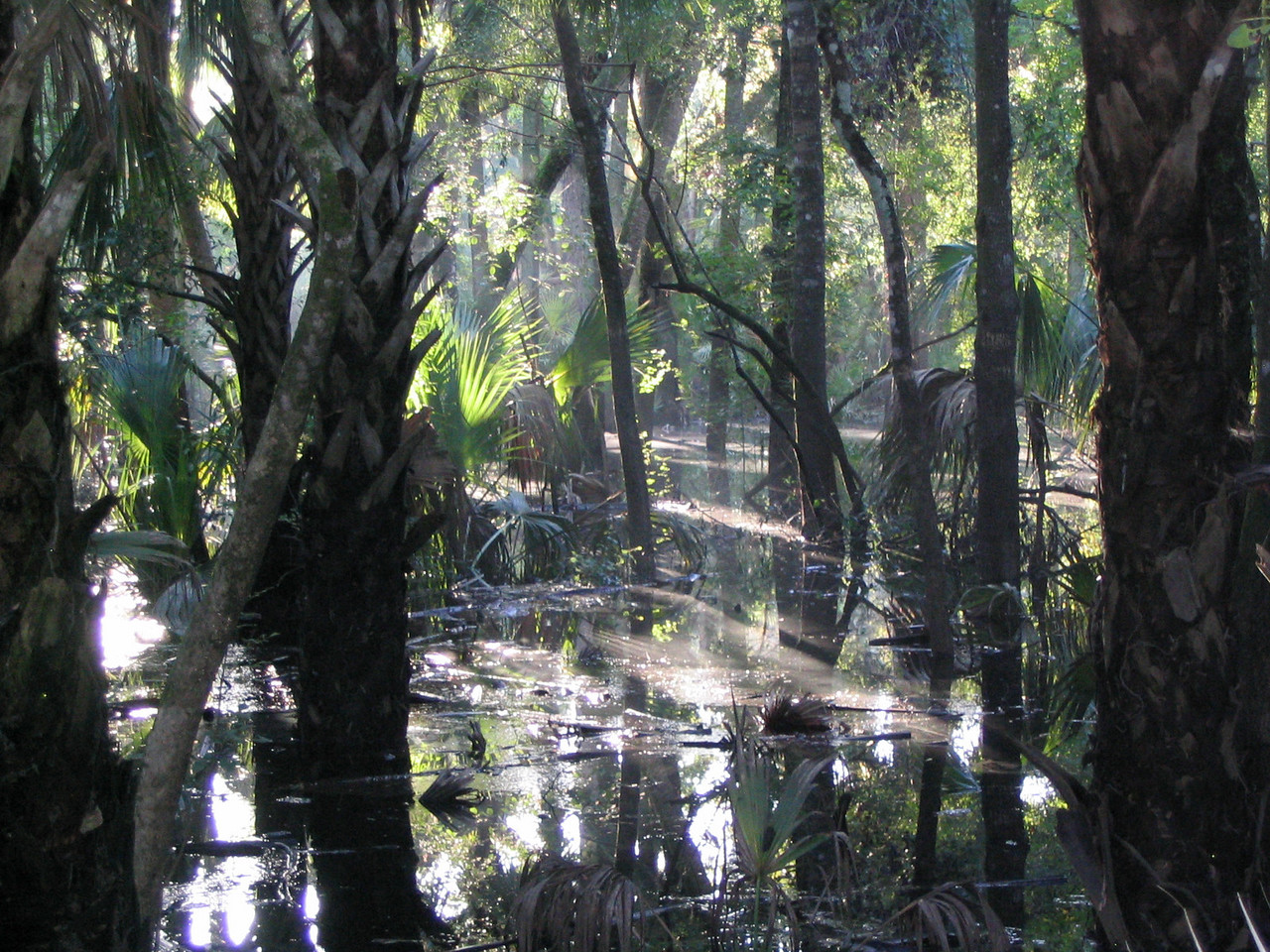 Floodplain forest<br /> PHOTO CREDIT: Brian OHalloran / Florida Trail Association