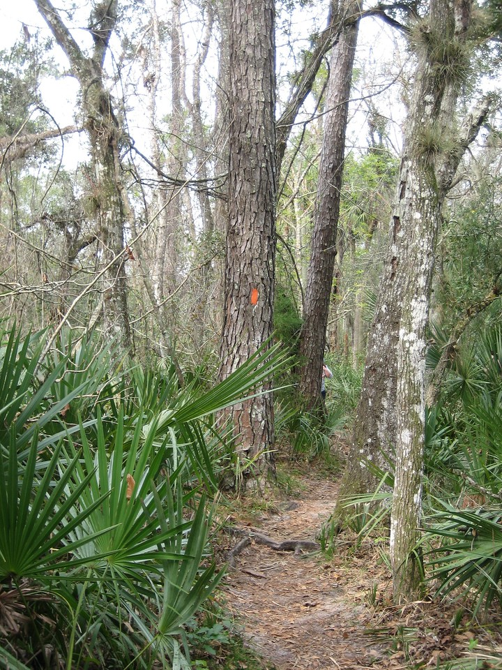 Along the Florida Trail<br /> PHOTO CREDIT: Sandra Friend / Florida Trail Association