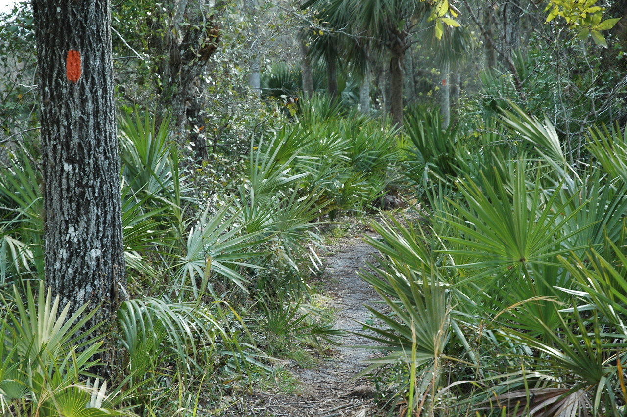 Along the Florida Trail<br /> PHOTO CREDIT: Willis Crawford/ Florida Trail Association