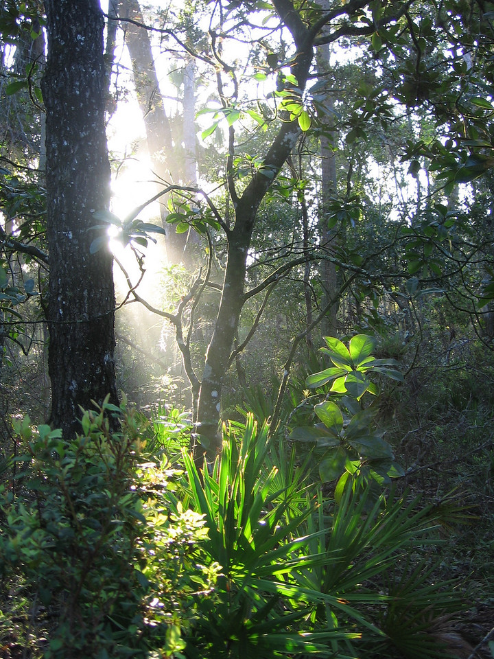 Morning light<br /> PHOTO CREDIT: Brian OHalloran / Florida Trail Association