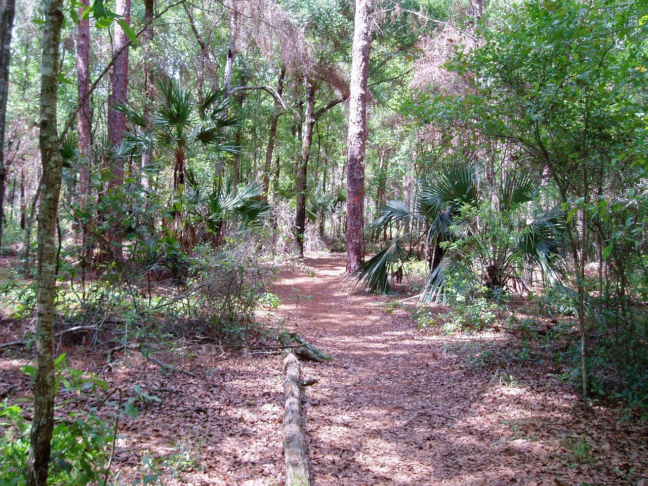 Florida Trail through Lower Wekiva Preserve State Park along SR 46 west of Sanford<br /> photo credit: FTA / Deb Blick