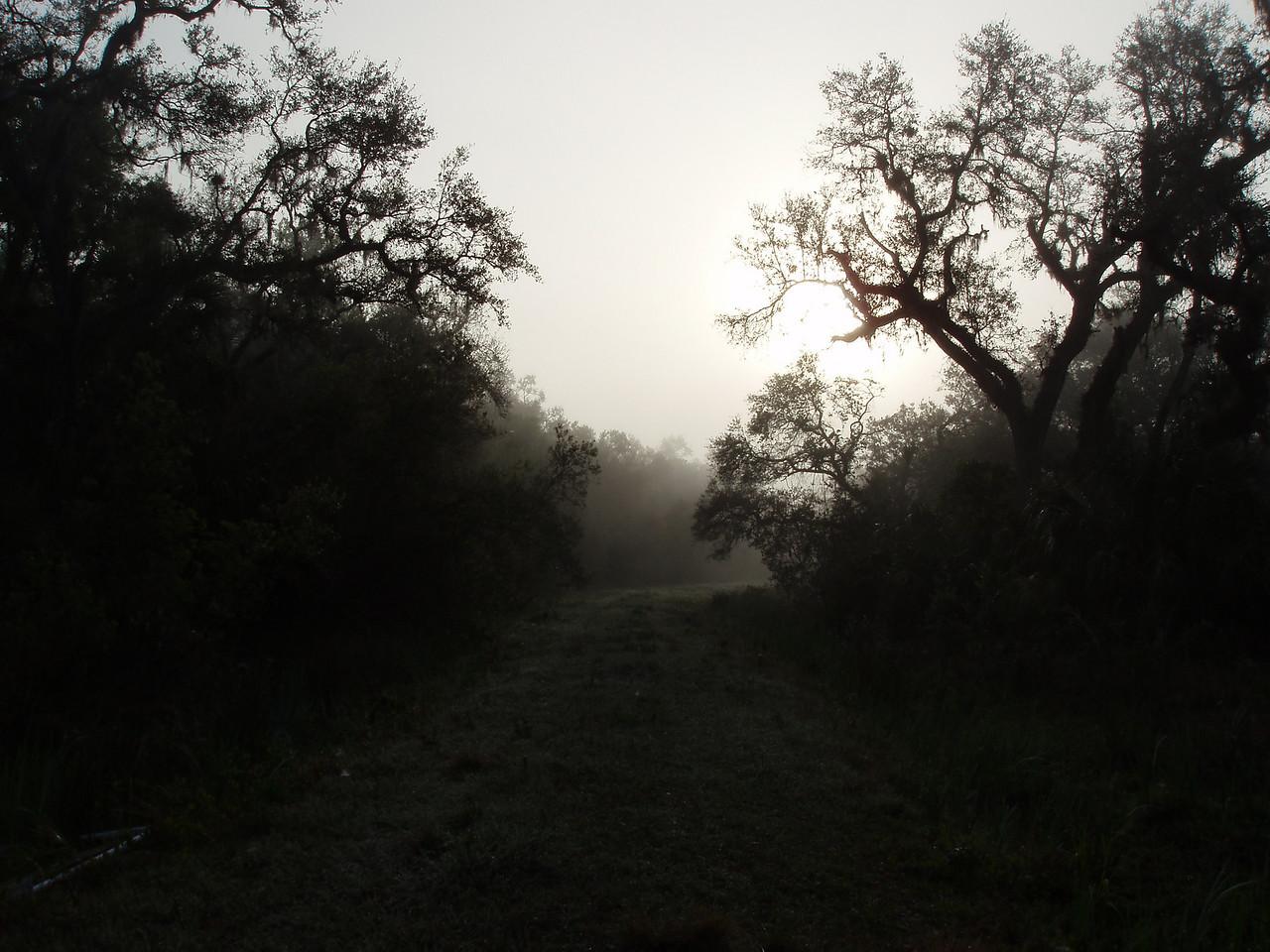 Walking the trail at daybreak<br /> PHOTO CREDIT: Robert Coveney / Florida Trail Association