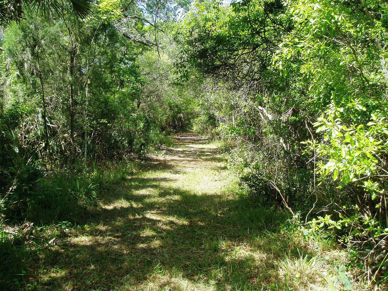 Florida Trail at Orlando Wetlands Park<br /> PHOTO CREDIT: Deb Blick / Florida Trail Association