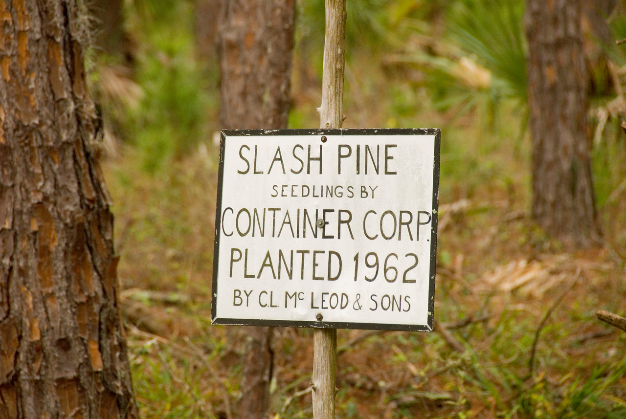 Slash pine forest<br /> PHOTO CREDIT: M. Timothy O'Keefe / Florida Trail Association