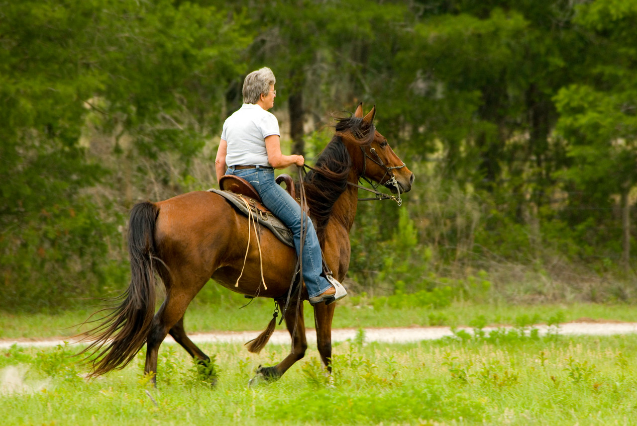 Horse and rider on crossing equestrian trail<br /> PHOTO CREDIT: M. Timothy O'Keefe  / Florida Trail Association