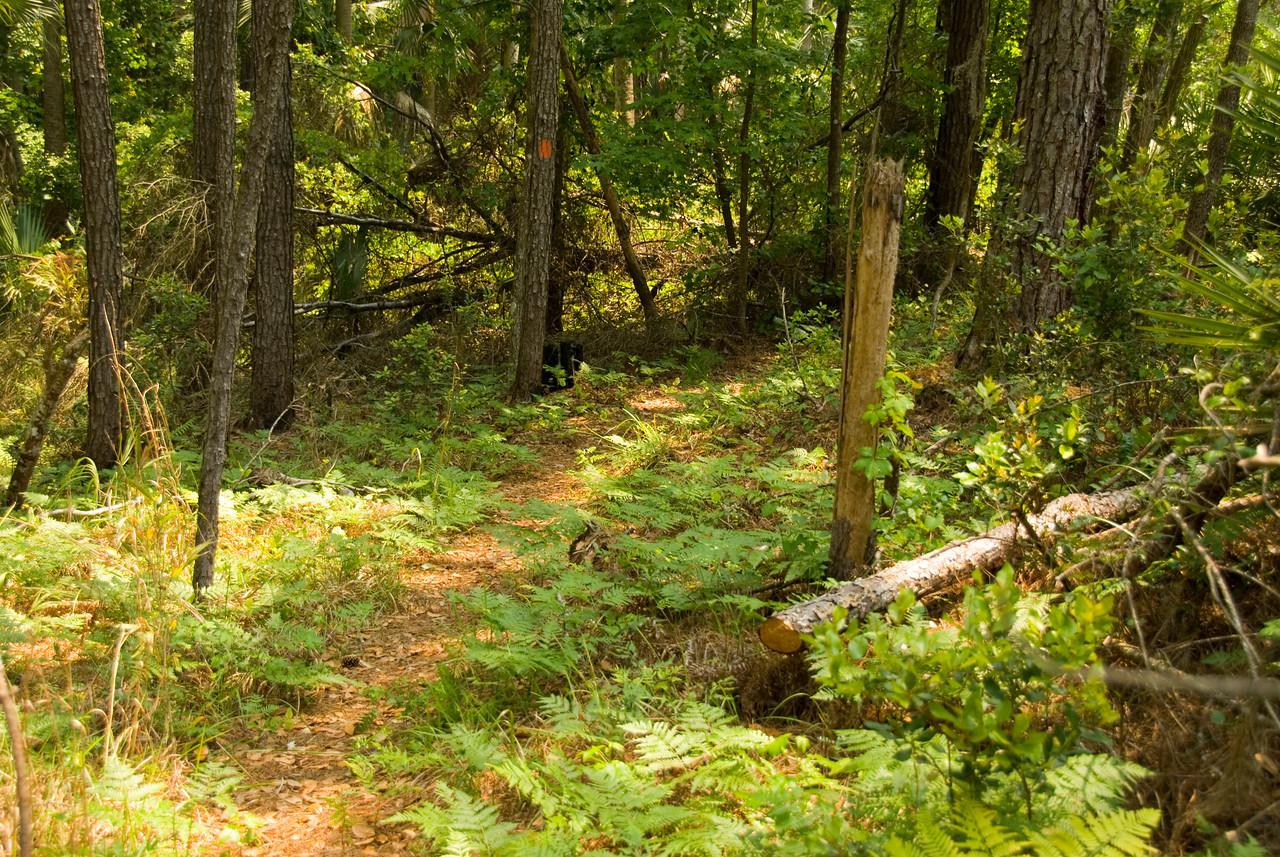 Along the Florida Trail<br /> PHOTO CREDIT: M. Timothy O'Keefe  / Florida Trail Association