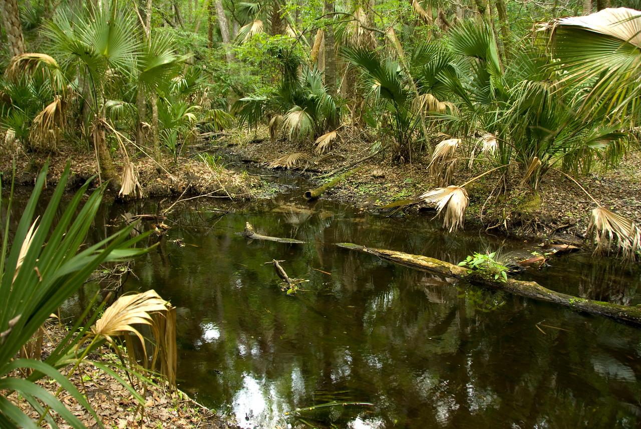 Blackwater Creek<br /> PHOTO CREDIT: M. Timothy O'Keefe  / Florida Trail Association