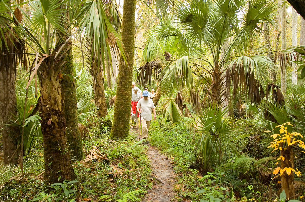 Hiking the Florida Trail along Soldier Creek<br /> PHOTO CREDIT: M. Timothy O'Keefe / Florida Trail Association