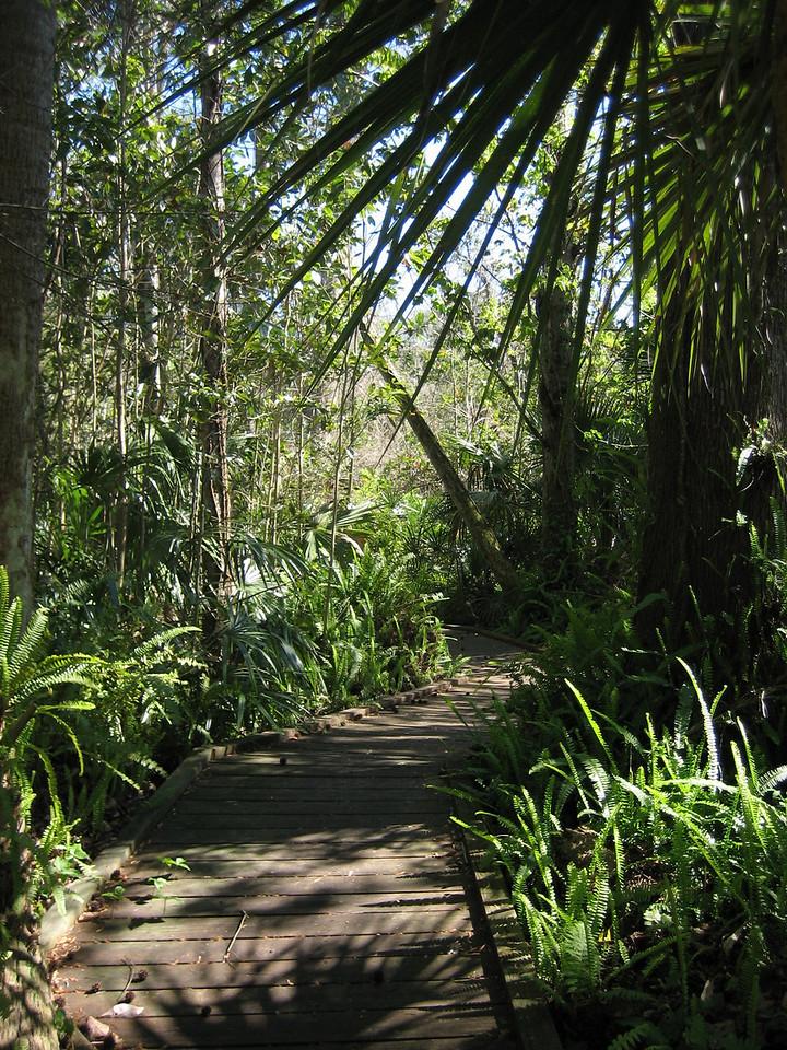 Boardwalk in Spring Hammock Preserve<br /> location: Winter Springs<br /> PHOTO CREDIT: Sandra Friend / Florida Trail Association