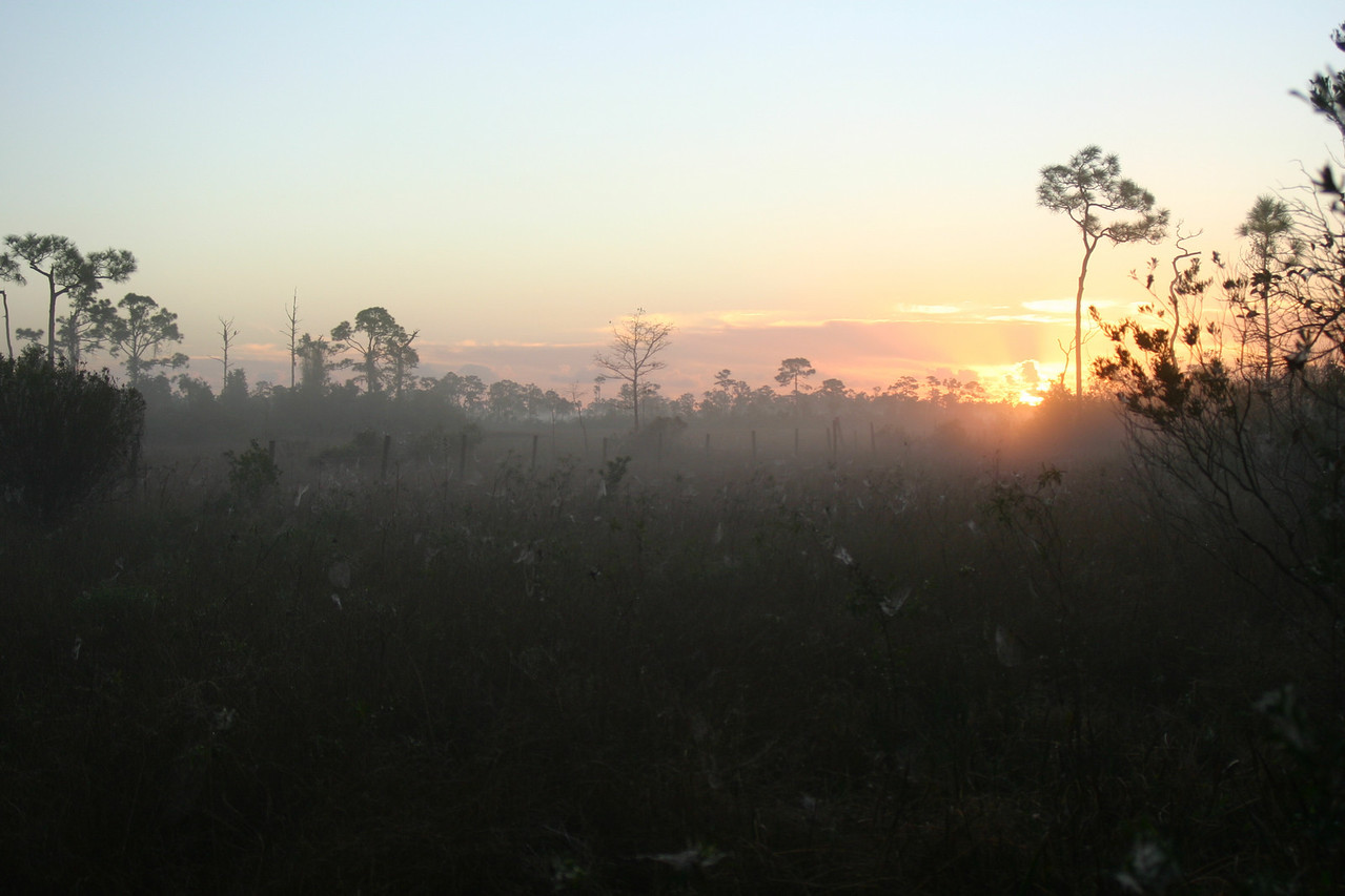 Hickory Hammock Sunrise<br /> PHOTO CREDIT: Claudine Laabs / Florida Trail Association